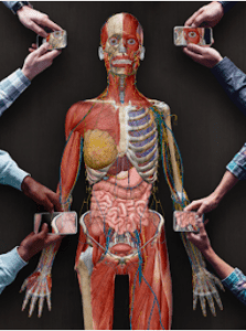 Human Anatomy Atlas For PC